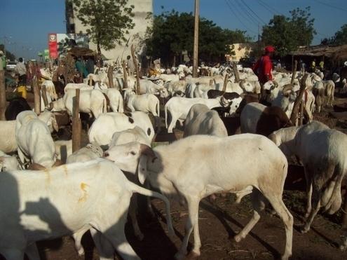 pénurie de moutons à Dakar